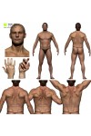 Colour Male Anatomy Bundle