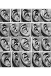 20 x Ear Scan Bundle
