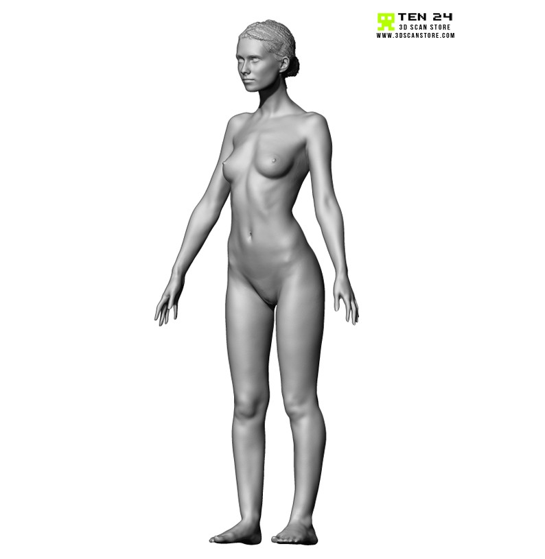 Awesome Female Anatomy Reference Model - Anatomy And Physiology ...
