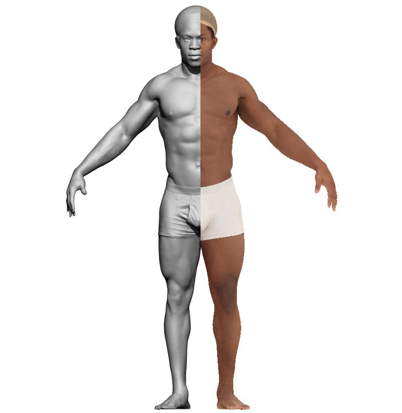 Male Anatomy 3d Model Images - human body anatomy