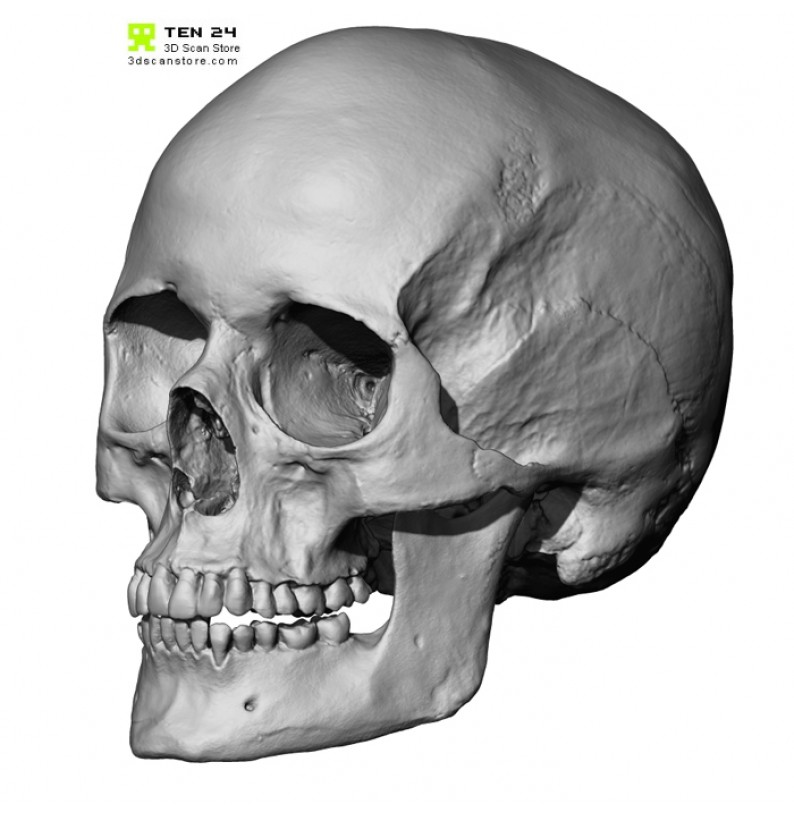 european female skull