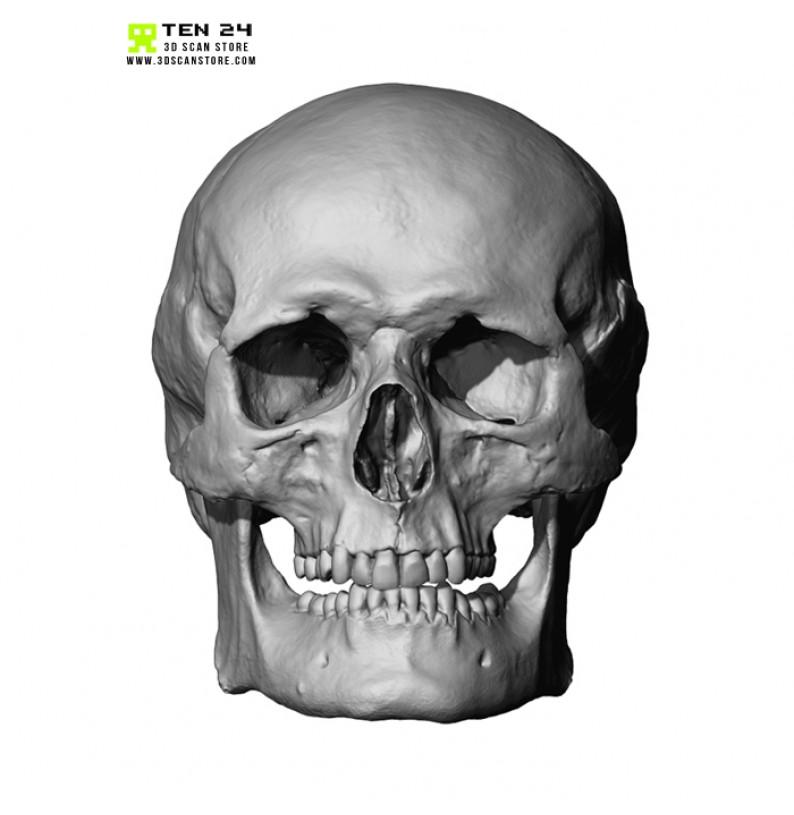 male female skull bundle